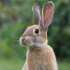 Газ - последнее сообщение от rabbit